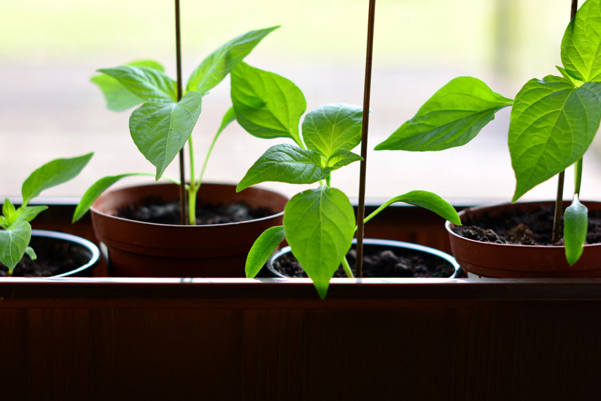 How to Grow Your Own if All You Have is a Windowsill and a Front Step