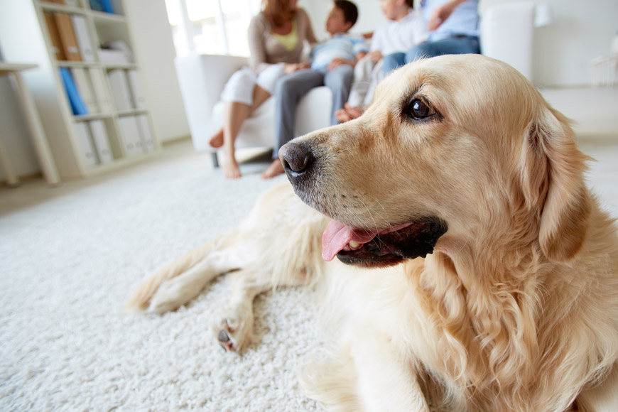 Pets and Vets in Bahrain