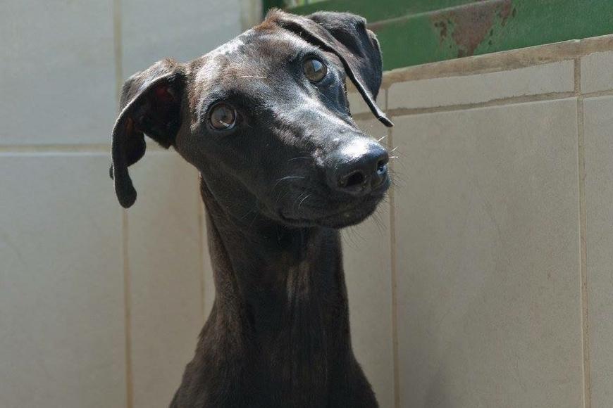 K9 Friends - Dogs for Adoption in Dubai