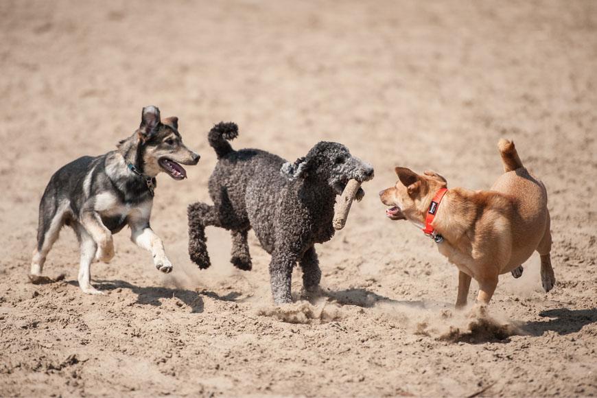 New Park in Dubai Lets Dogs Run Free