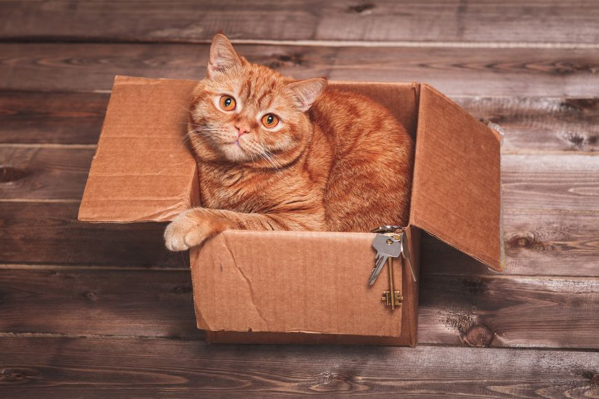 Top Tips for Relocating Your Pets