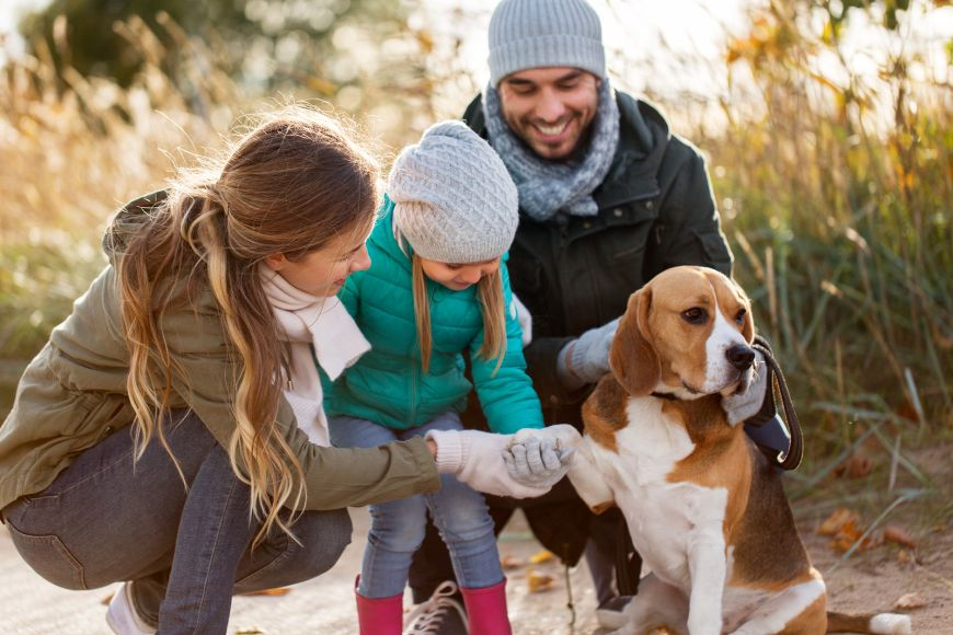Top 3 Most Pet Friendly Countries in the World