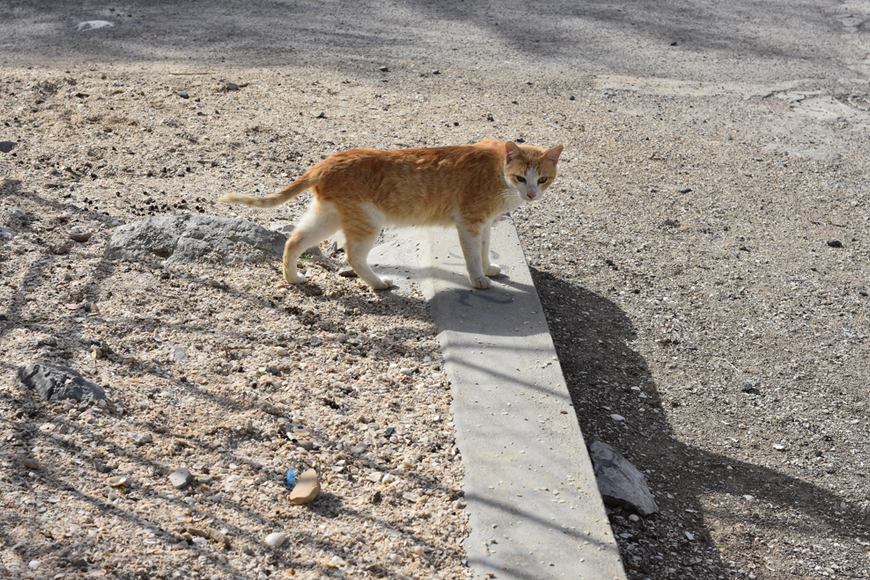 TNR in Dubai for cats
