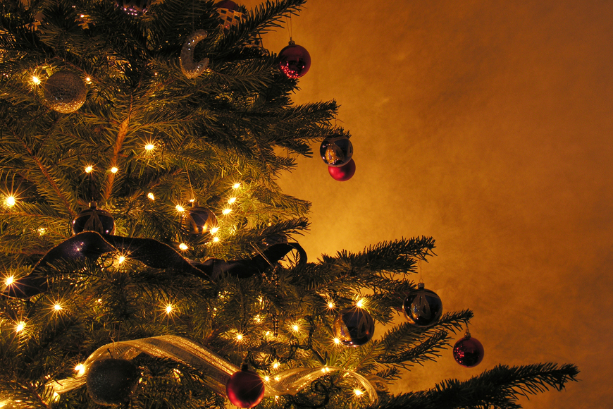 Why you should water your Christmas tree