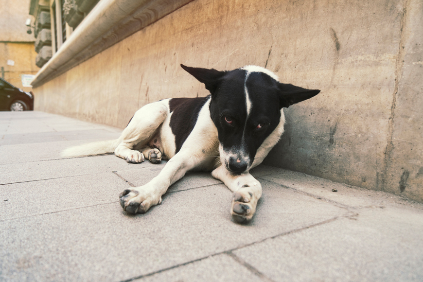 Dumped pets in Dubai - important advice for dog owners