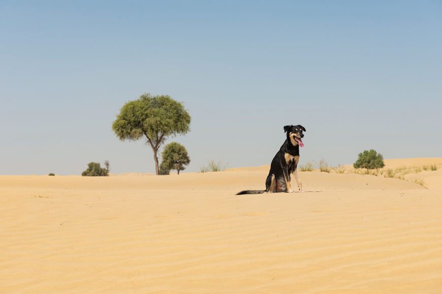 Dog owner rules and regulations in Dubai