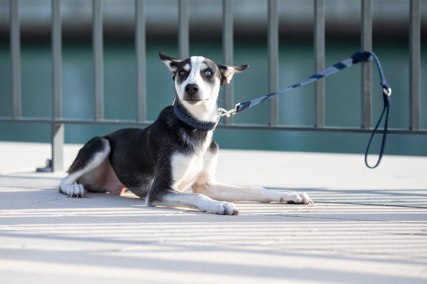 Report animal cruelty in UAE