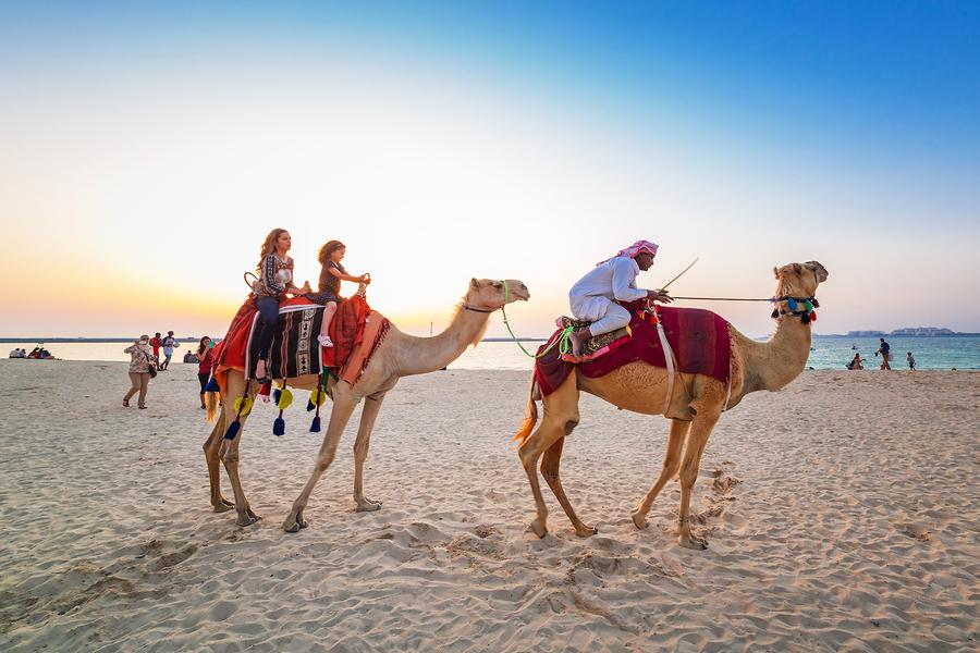 dubai camel on beach
