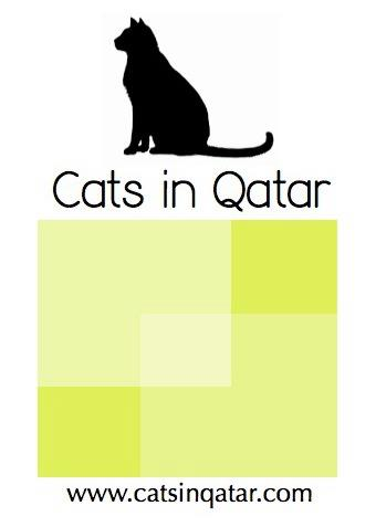 cats in qatar charity