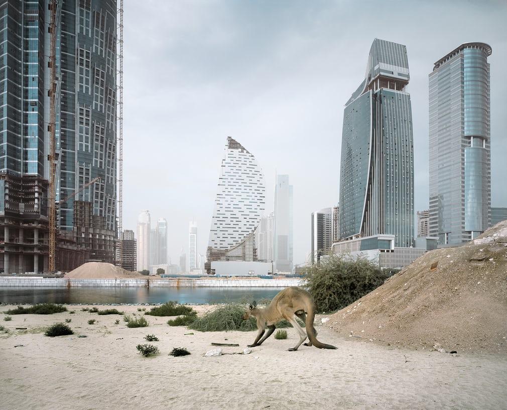 Zoo animals in Dubai - photography series by Richard Allenby-Pratt