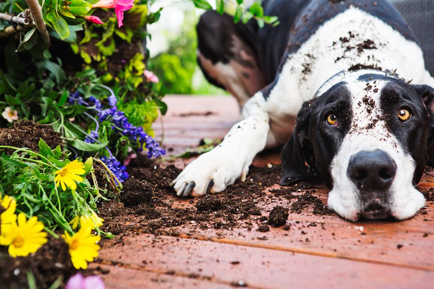Pet Regulations in the UAE: A Guide for Expats