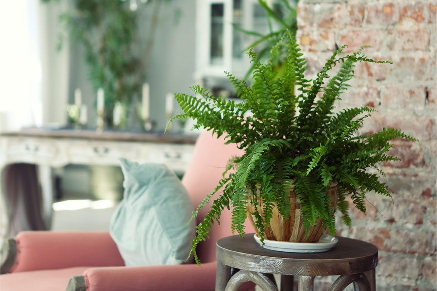 Which Houseplants Work Best and How Should You Care for Them?