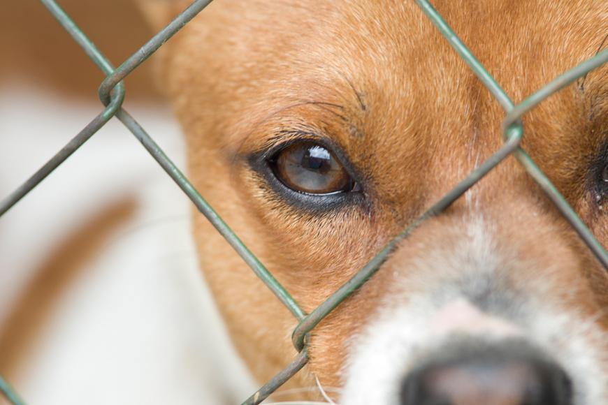 K9 Friends in Dubai: Adopt a Dog in Dubai