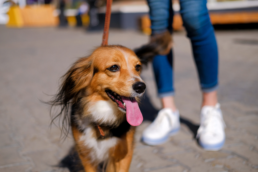 Pet-Friendly Places in Oman