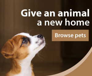 Pets for Adoption on ExpatWoman's Classifieds