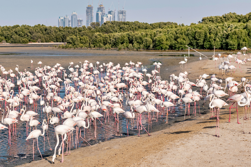 Ras Al Khor Wildlife Sanctuary Guide: How to Get There and What to See