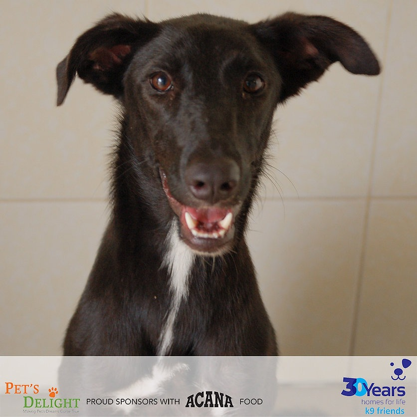 Best dogs to adopt in Dubai