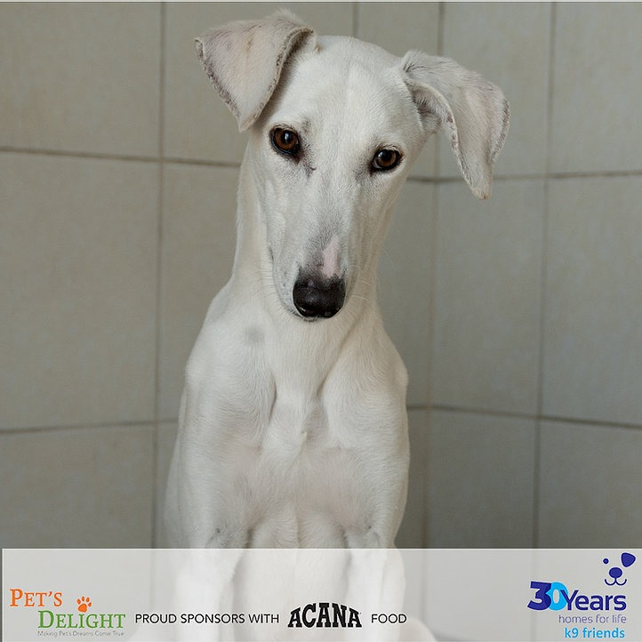 Vaccinated dogs to adopt in Dubai