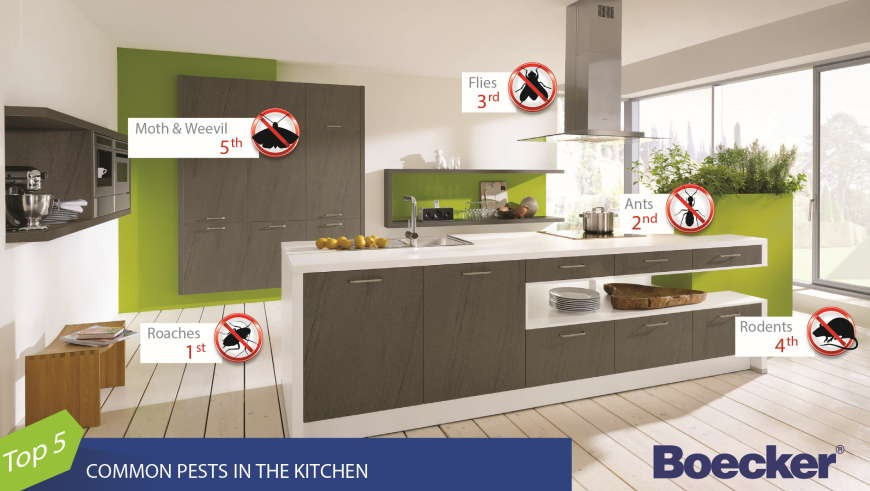 Types of Kitchen Pests