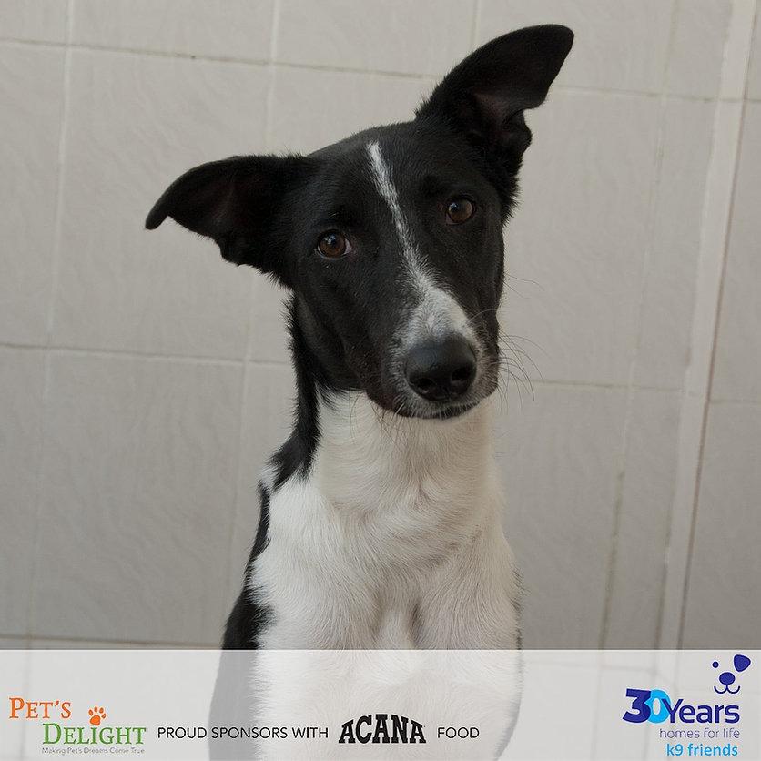 Dogs for adoption in Dubai 2021