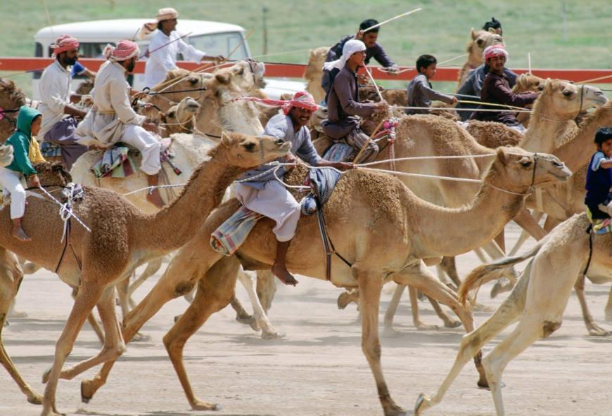 Camel racing in Abu Dhabi history