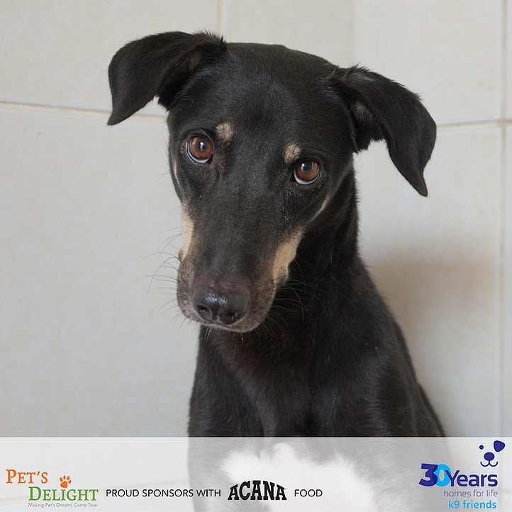 Mixed breed dogs for adoption in Dubai 2021