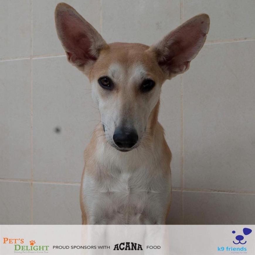 Where to adopt vaccinated and neutered dogs in UAE