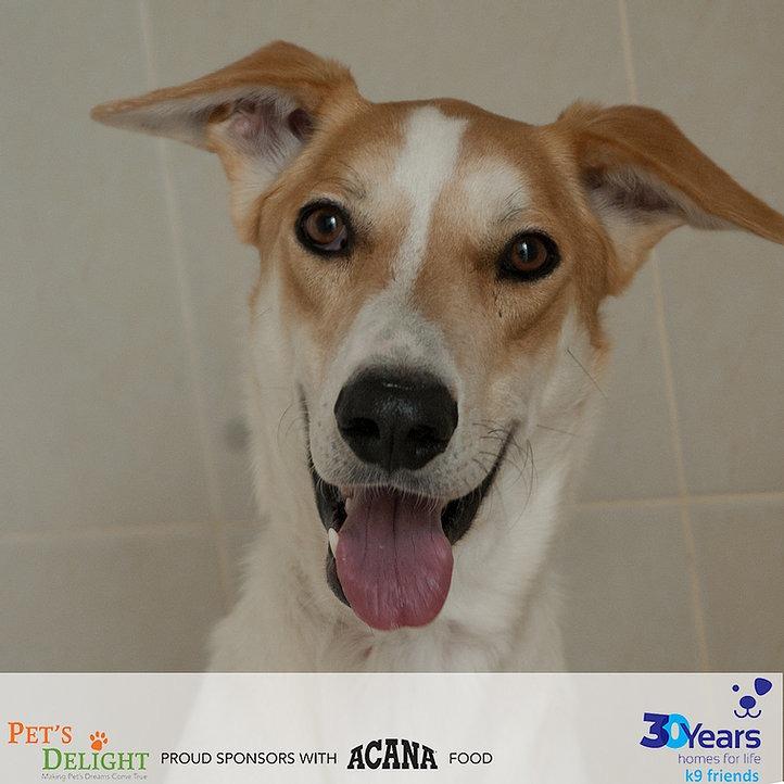 Dogs to adopt in Dubai