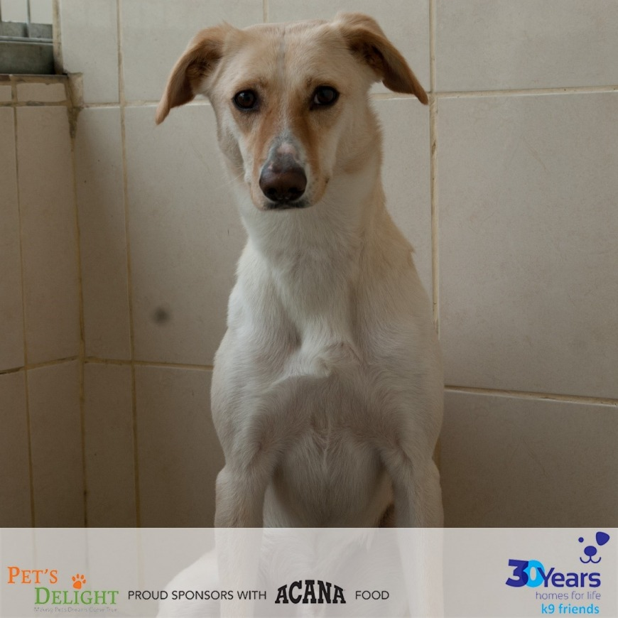 Best places to adopt a dog in Abu Dhabi