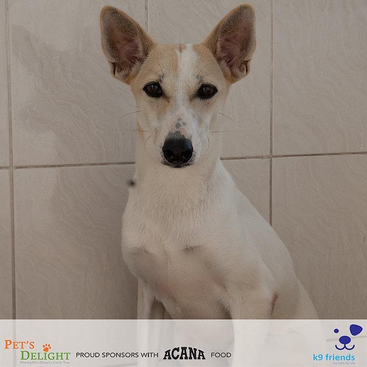 Friendly dogs for adoption in Dubai