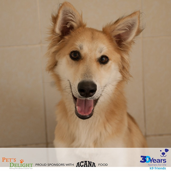 Vaccinated dogs for adoption in Dubai