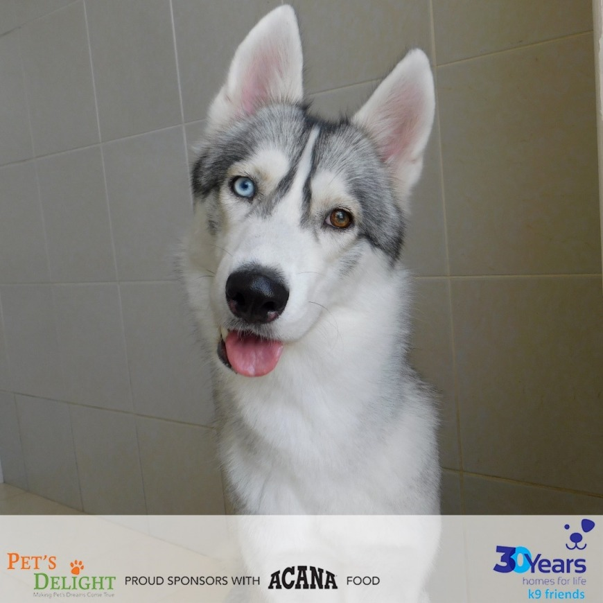 Dogs for Adoption in Dubai