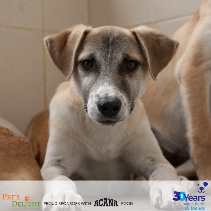 These Gentle and Loving Dogs in Dubai Are Available for Adoption