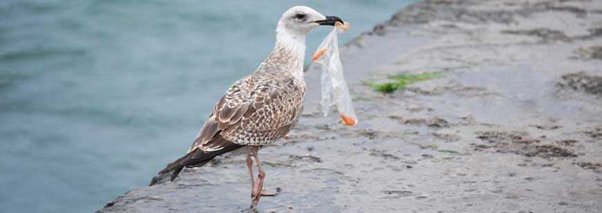 Oman to Ban Plastic Bags in Supermarkets