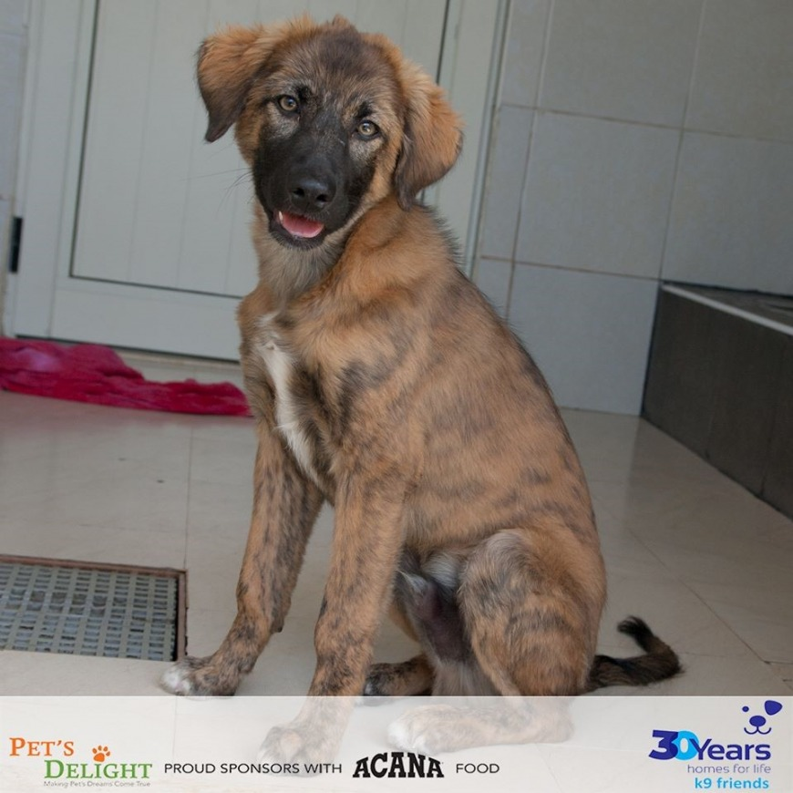 13 Adorable Dogs in Dubai Are Looking for a Forever Home