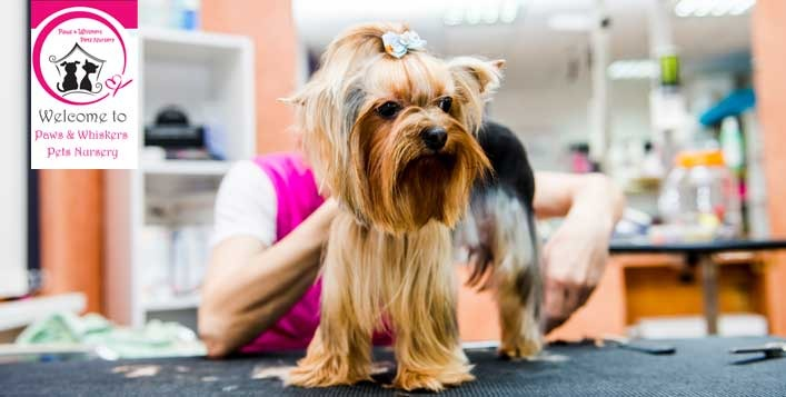 Pet Grooming and Pampering Services in Dubai Under AED 100