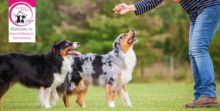 Best pet training services in Dubai
