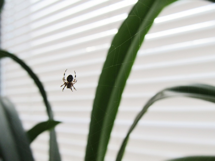 How to prevent spiders in your home
