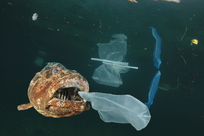 Microplastics: What are they?