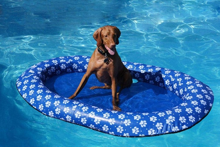 How to keep dogs cool in Dubai