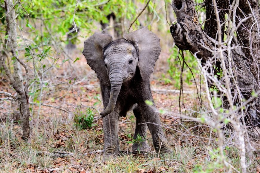 Expat Life in South Africa: The Discoveries I Made: baby elephant in a game reserve