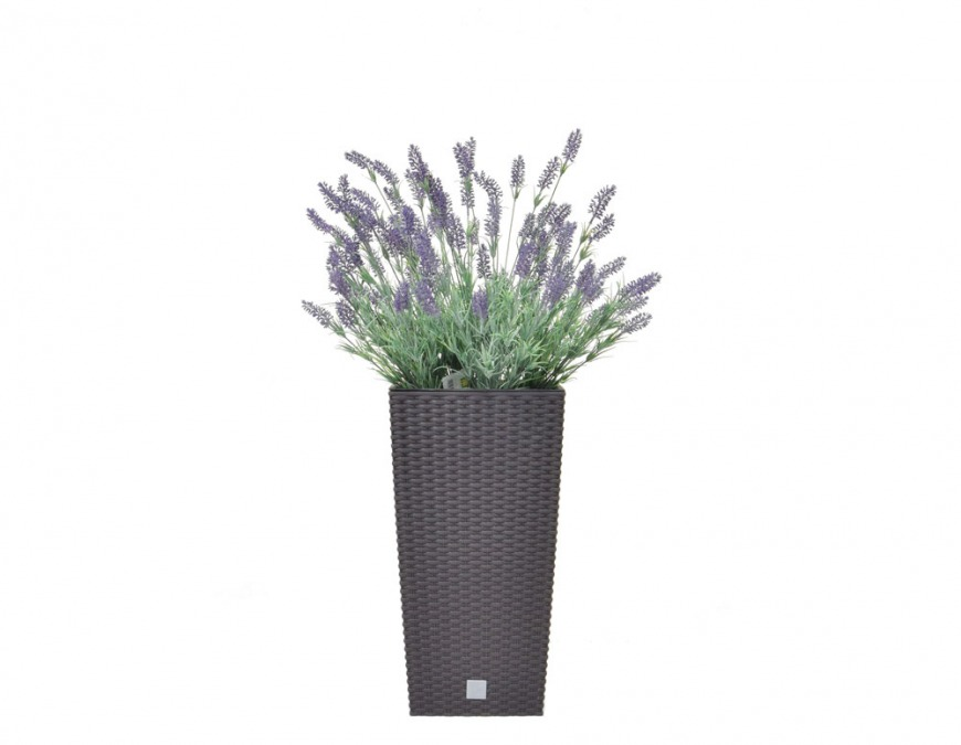Lavender in Umber Tall Pot