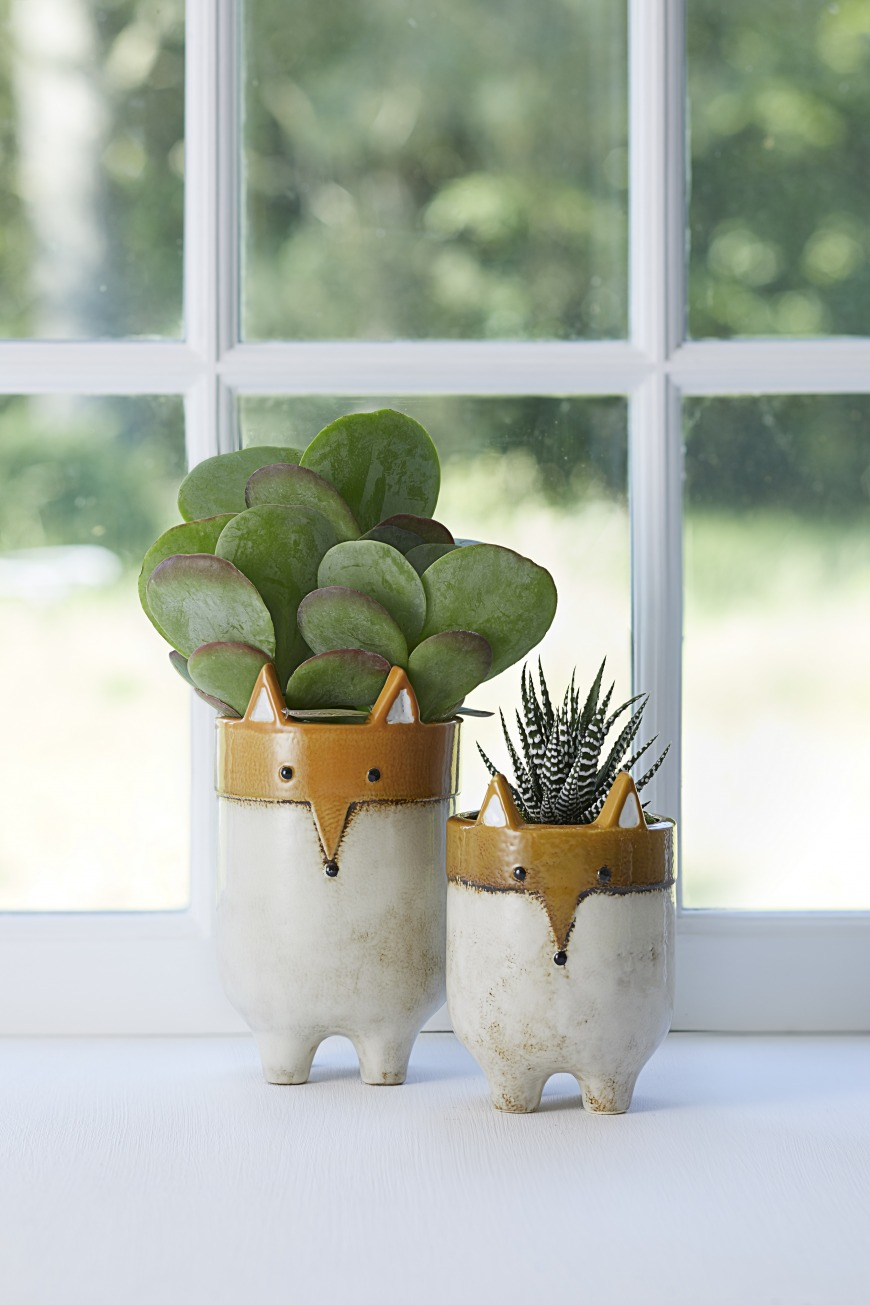 What tips would you give for caring for houseplants?