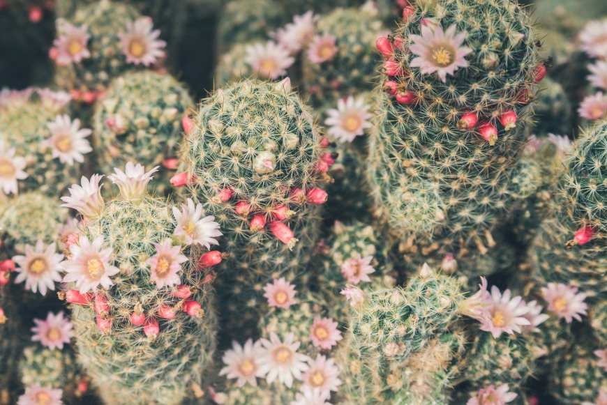 Caring for your cactus