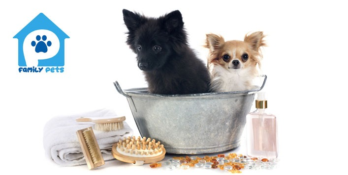 Wash and dry service for cats and dogs in Dubai