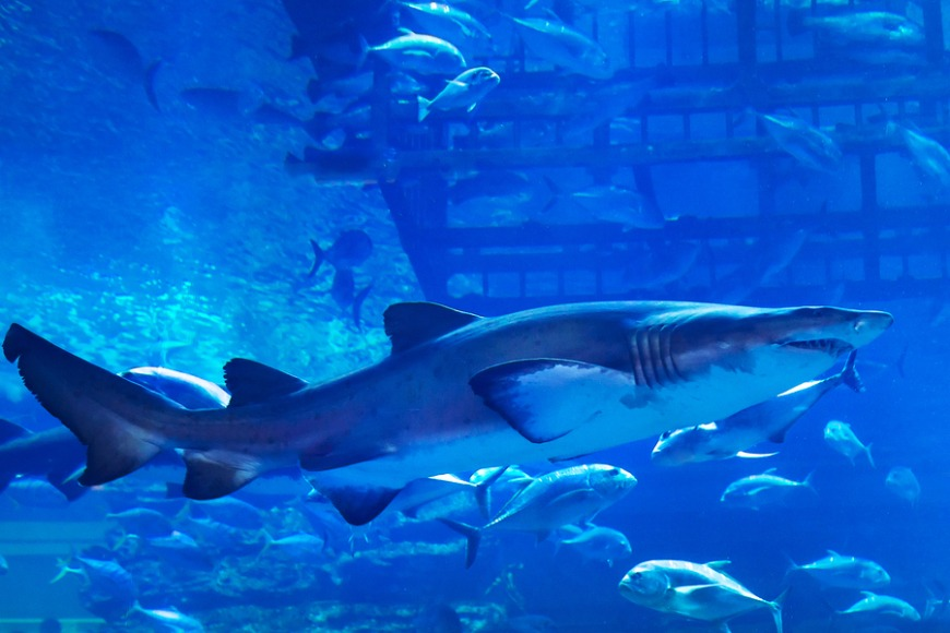 7. Swim with sharks at the largest indoor aquarium in the world