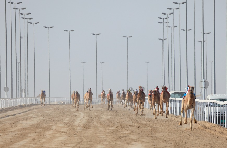 Remote-controlled robot jockeys are used for camel racing.