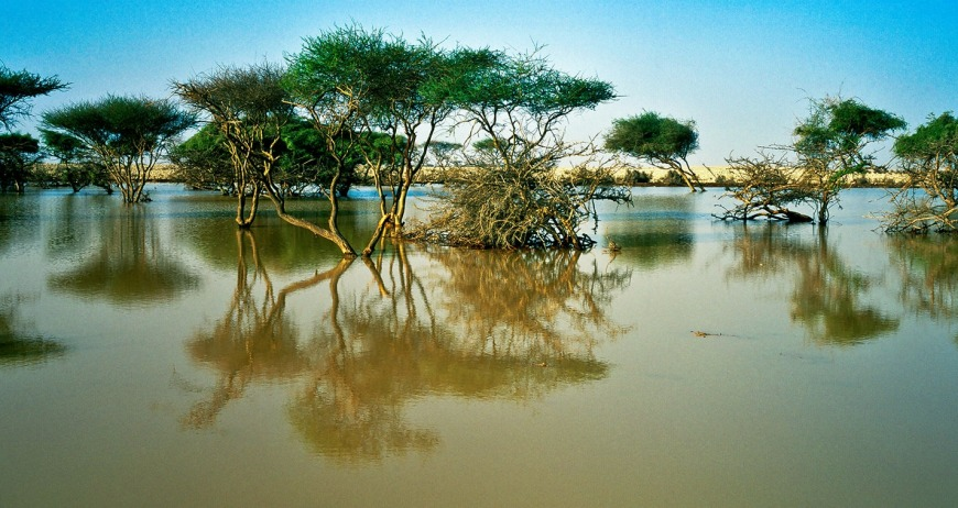 Al Thakira Mangroves | Photo: visitqatar.qa