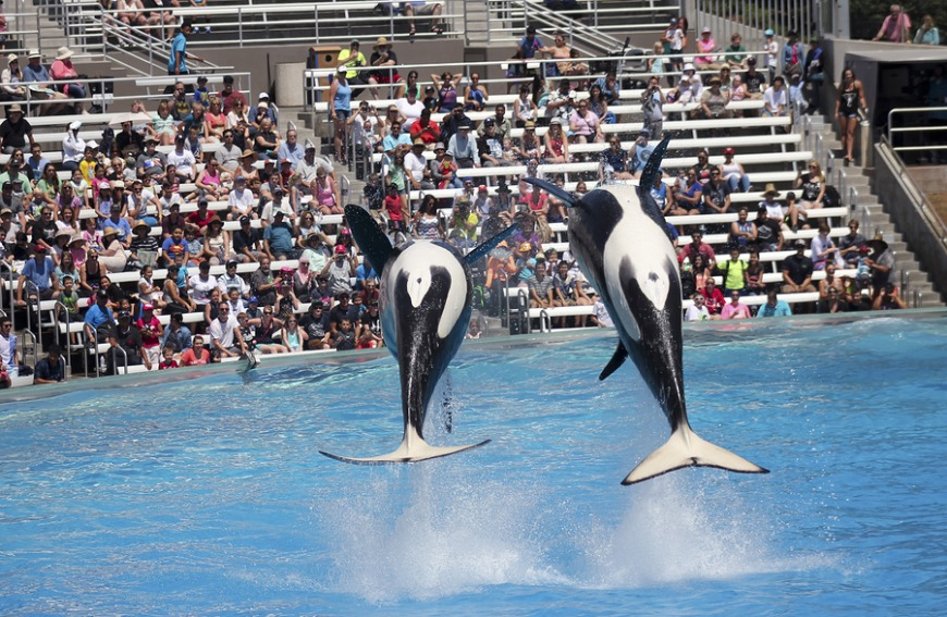 SeaWorld is heading to Abu Dhabi... And the new park won't have orcas