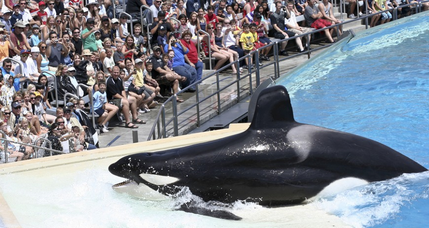 The park received huge backlash towards its orca-breeding program and has no ended it's program
